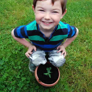 Eóin Redmond (aged 3) holding a pea shoot in a plant pot, taken by Caítríona Redmond.