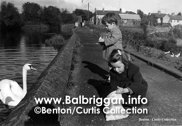 Fergus & Pauline Benton feeding the swans in Balbriggan