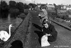 Fergus_and_Pauline_Benton_feeding_the_swans_in_Balbriggan_smaller